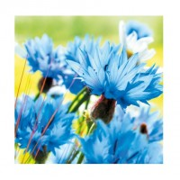 Servetele de masa Herlitz 3 straturi, 33x33cm, set 20, albastrele