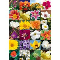 Abtibild decor cu flori, Herma